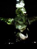 12恐竜_1900.jpg