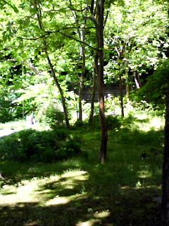 カリンの庭_1201.jpg