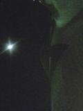 月光1839.jpg