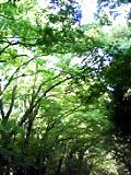 糺の森.jpg